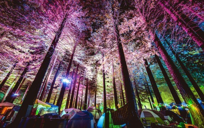 Grove At Night (@KRISTINABAKY) - NNMF Neon Owl